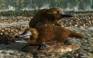 Platypuses by deskridge