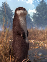 Standing Otter by deskridge