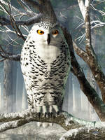 Snowy Owl by deskridge
