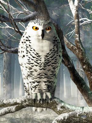 Snowy Owl by deskridge