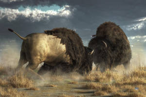Buffalo Clash by deskridge