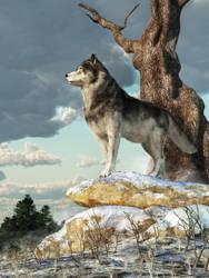 Lone Wolf by deskridge
