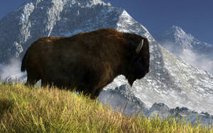 Rocky Mountain Buffalo by deskridge