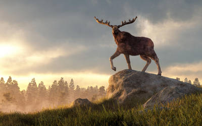 Moose at Dawn by deskridge