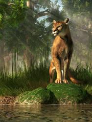 Florida Panther by deskridge