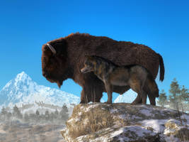 Buffalo and Wolf by deskridge