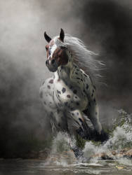 Appaloosa by deskridge