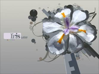 Iris Flower Wallpaper. by UberzErO