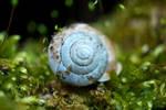 Only a shell. by Zaellrin