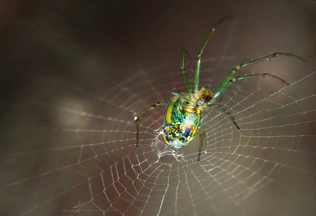 Spider perspective by Zaellrin