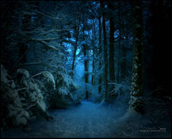 Dark Forest by thinkingupwards