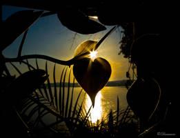I Heart the Sun by thinkingupwards