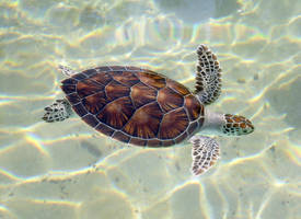 Sea Turtle by PhotoDude