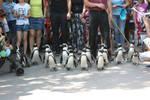 Penguins 1 by CastleGraphics