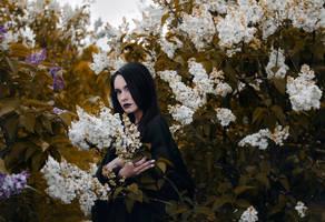 Enchantress' Garden by Econita