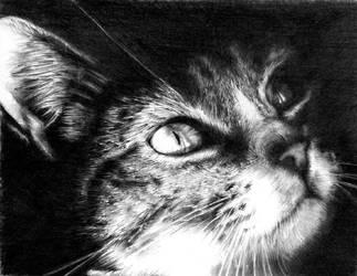 Cat by RCEGRL