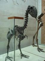 Chocobo skeleton by MAnimeX