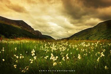 The Whisper Field by nasigoreng