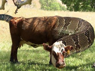 Cattle Snake By Chainsawlegs On Deviantart