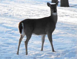 Deer by beccabex81