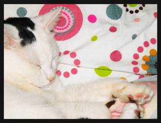 Kitty Cat by beccabex81