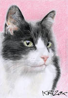 SALEM -  black cat and white by krizok