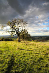 Tree Line by SomersetCider