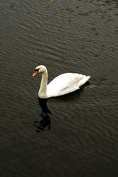 Swan by SomersetCider