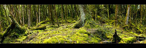 Knyvet Falls Forest Walk by MrStickman
