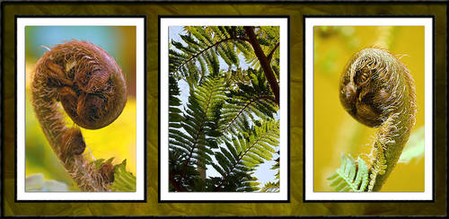 Fern Pod and Leaves by MrStickman
