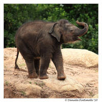 Lucky Elephant by TVD-Photography