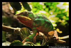 Chameleon Camo by TVD-Photography