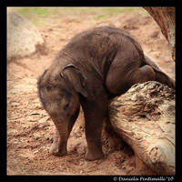 Baby Elephant Gymnastics II by TVD-Photography