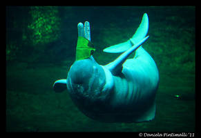 Amazonian River Dolphin by TVD-Photography