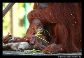 Baby Orangutan II by TVD-Photography