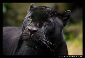 Mowgli Closeup II by TVD-Photography