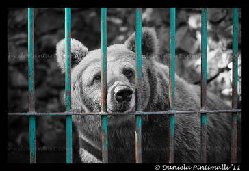 Brown Bear: Help by TVD-Photography