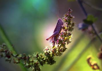 Little Locust by Edwige-Lch