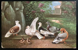 Vintage Postcard - Sparrows and Fancy Pigeons by KarRedRoses