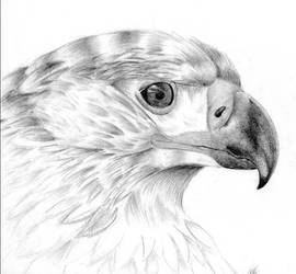 Eagle by Talpy