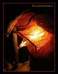 Flower's light by Sinensis