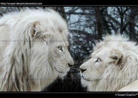 White Lions 1108-V2 by Sooper-Deviant