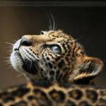 Jaguar Cub 4618P by Sooper-Deviant