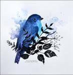Bluebird by umbralmoon