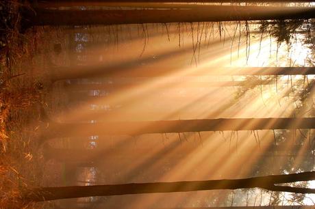 Light by 1maliniak1