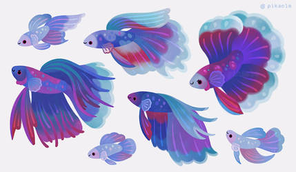 Blue Betta by pikaole