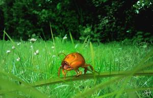 Bug by thmc
