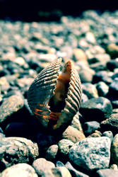 Shell by musicismylife2010
