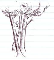 Trees by Aurhia