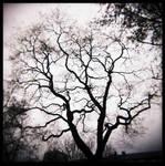 les branches by quadratiges